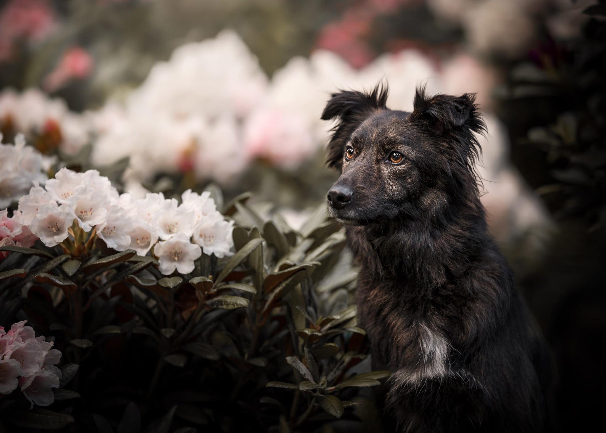 der Wunsch vom eigenen Hund