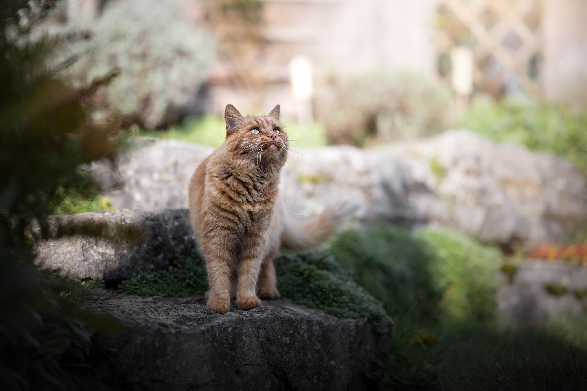 Rote Katze genießt die Sonne im Garten
