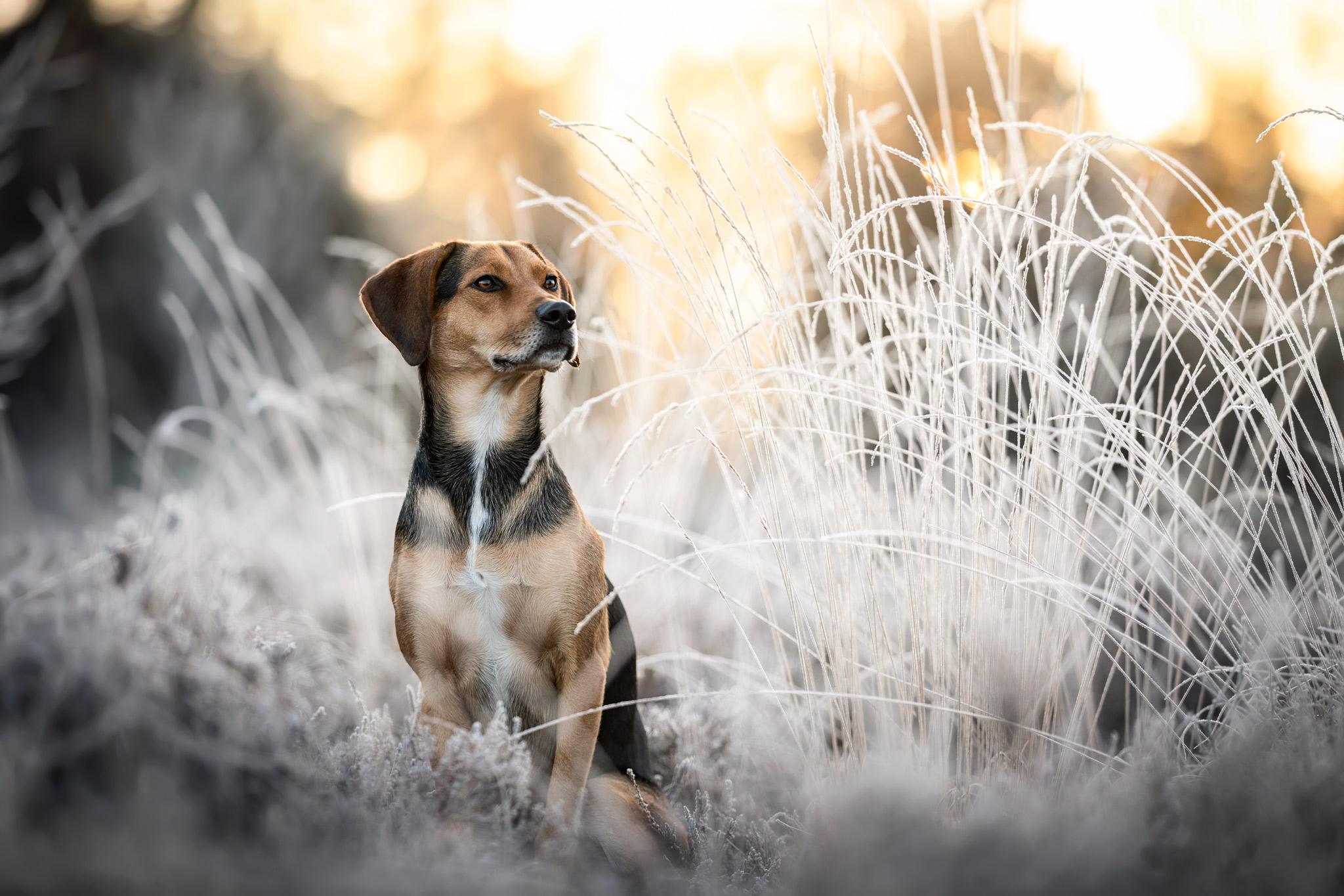 Frost Portrait