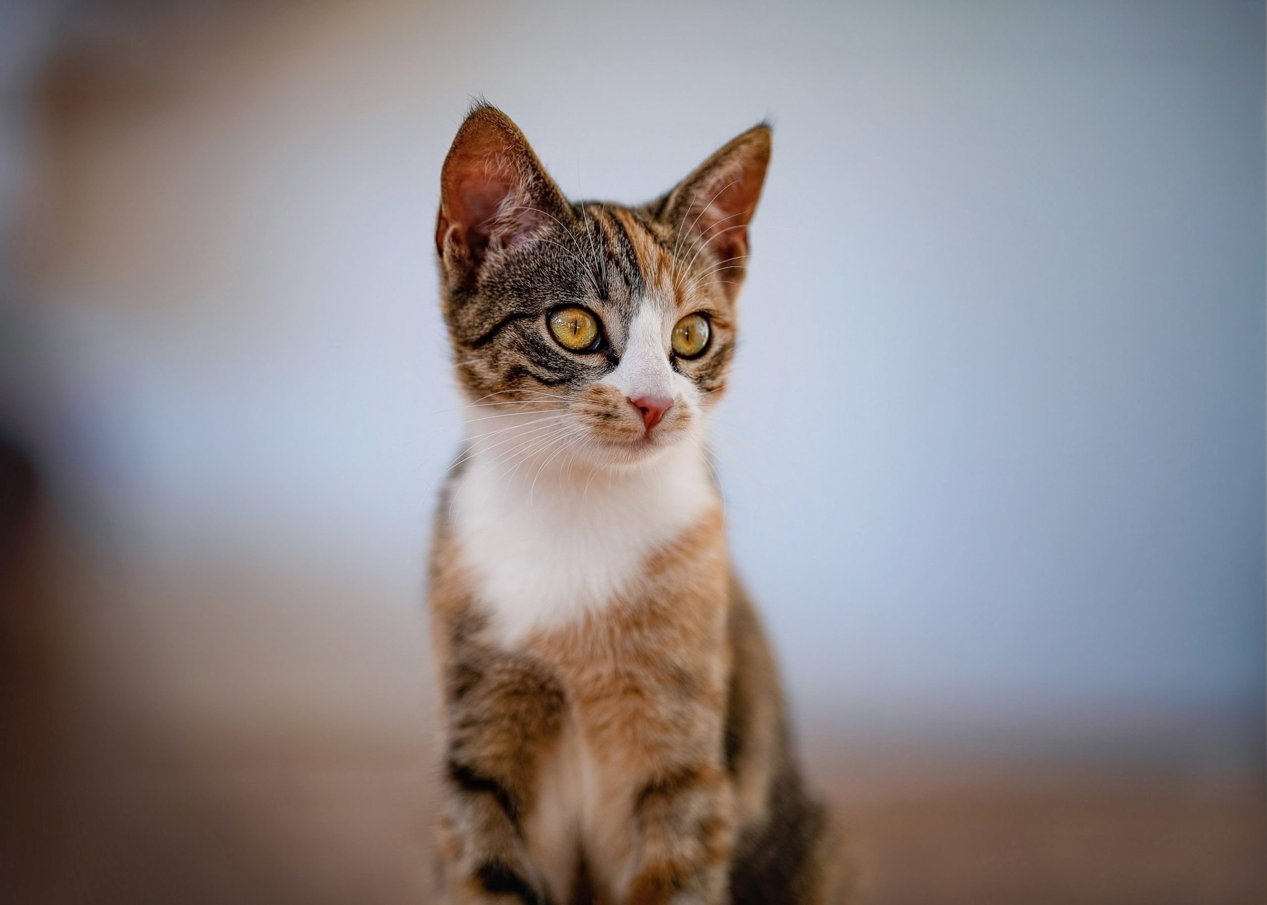 Katzenbaby Portrait