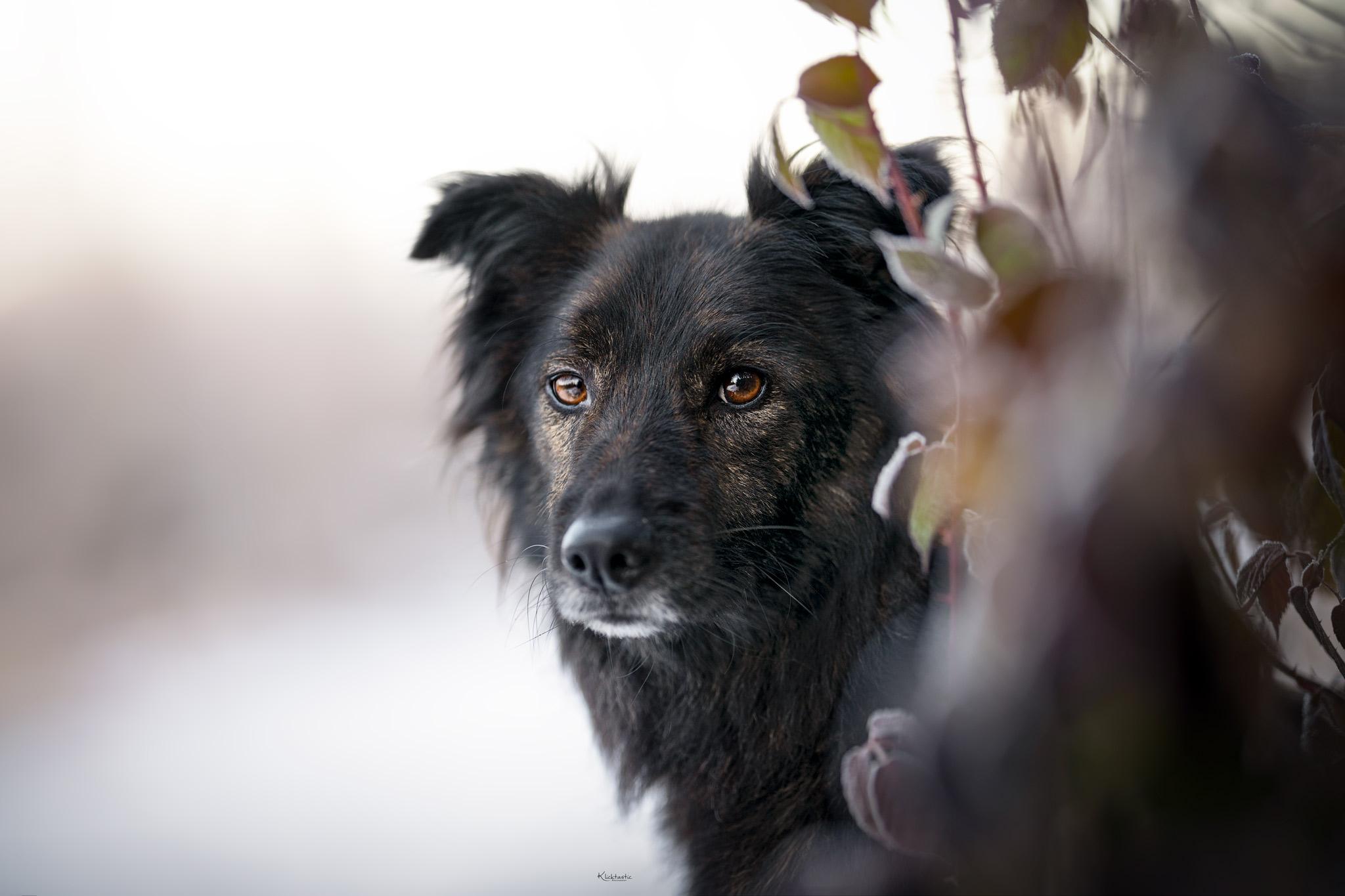 Hundeportrait Nahaufnahme