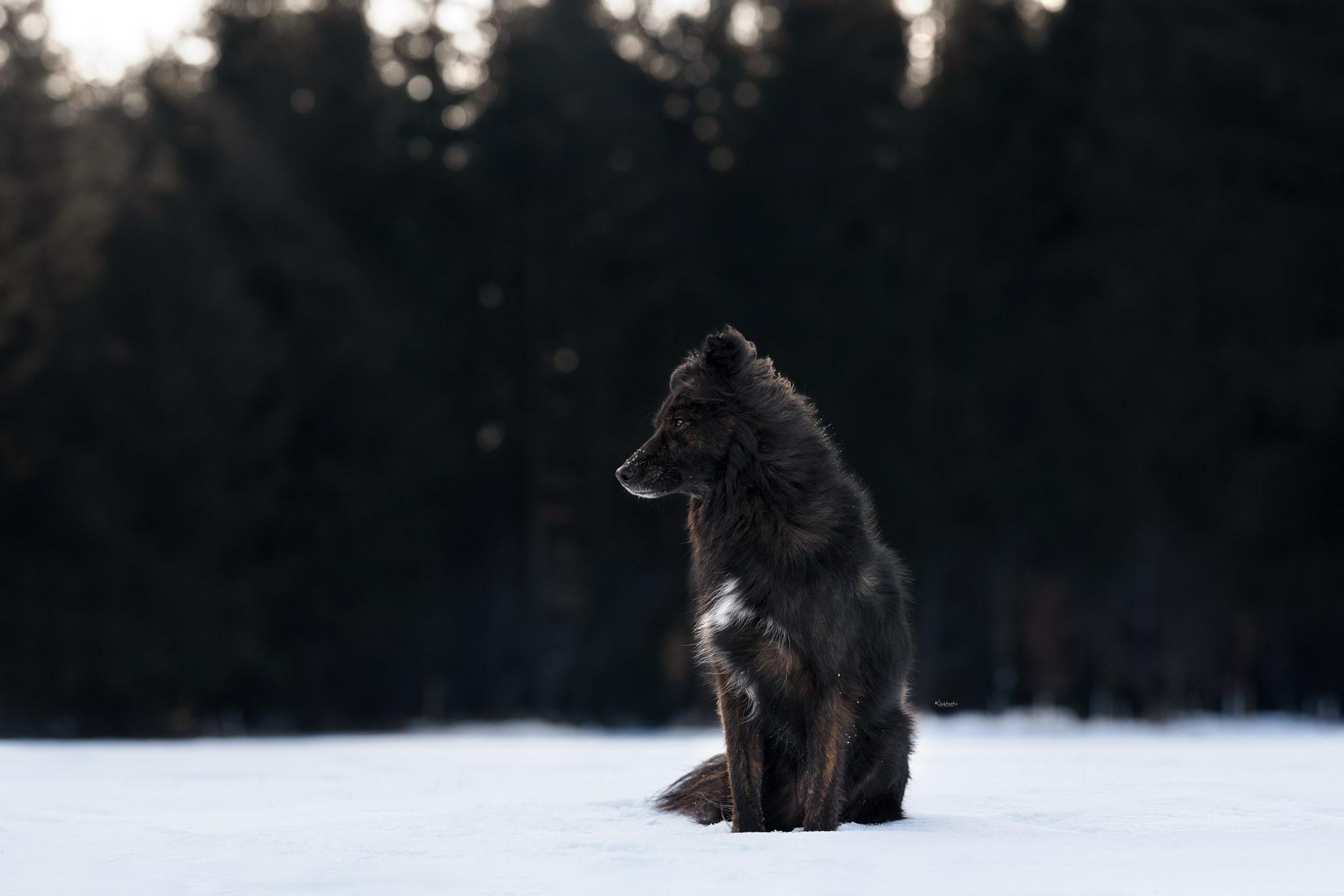 Sitzender Hund genießt Schneetag