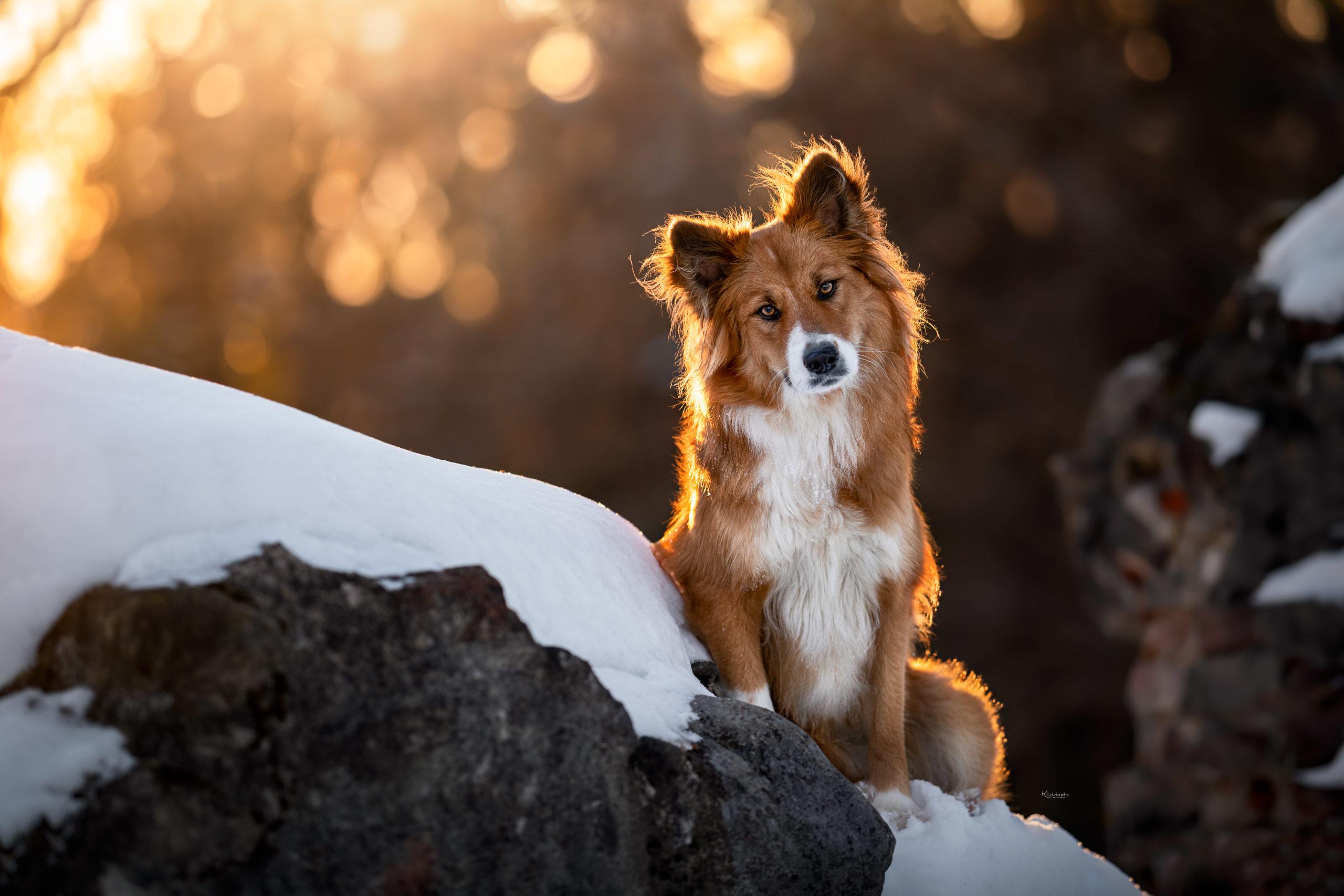 Canilo im Schnee bei Sonnenuntergang